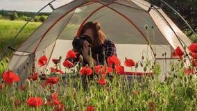 Żeński fotograf bierze obrazek maczki siedzi blisko podróż namiotu zbiory