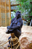 Żeński goryl obraz stock