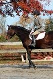 Żeński jeździec na Brown koniu w spadku Fotografia Royalty Free