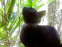 Żeński kot mouschÃ, Brown kot - Obraz Stock