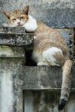 Żeński kota relaksować Zdjęcia Stock