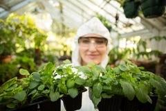 Żeński mienie puszkować naukowiec rośliny Fotografia Royalty Free