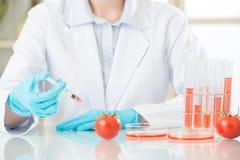 Żeński naukowiec patrzeje dla gmo pomidoru dna dla bezpieczeństwa Zdjęcie Stock
