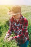 Żeński rolnik egzamininuje pszenicznych ucho w polu Obrazy Royalty Free