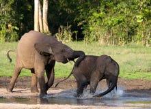 Żeński słoń z dzieckiem Zdjęcie Royalty Free