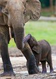 Żeński słoń z dzieckiem Obrazy Royalty Free