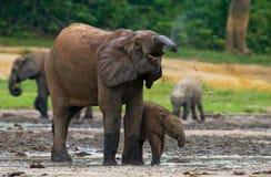 Żeński słoń z dzieckiem Obraz Stock