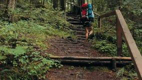 Żeński wycieczkowicza odprowadzenie w halnym lesie w górę drewnianych schodków zdjęcie wideo