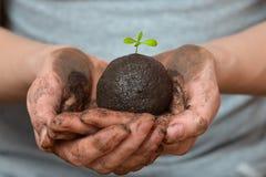 Żeńskie ręki trzyma glebową piłkę z małą zieloną rośliną Ekologia i środowisko, ziemski opieki pojęcie Zdjęcie Stock