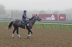 Żeńskiego ćwiczenia Koński jeździec, Saratoga wiosny, NY, Tom Wurl Obrazy Royalty Free