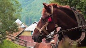 E Άλογο με foal που στέκεται στον επίγειο δρόμο στο χωριό Προσεκτική στάση σίτισης ζώων απέναντι απόθεμα βίντεο