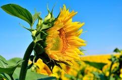 E аграрные урожаи Стоковые Фото