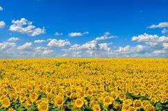 E аграрные урожаи стоковое фото