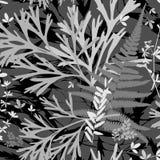 E Гербарий с полевыми цветками, ветвями, листьями Ботанический monochrome предпосылки иллюстрация вектора