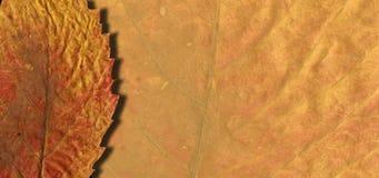 E Листья осени нарисованы с мелом на черной доске Эскиз, элементы дизайна стоковое фото