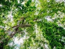 E Природа Стоковая Фотография RF