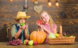 E Сельское хозяйство учит детям куда их еда приходит от Овощи мальчика девушки фермеров детей жмут ферму семьи стоковое изображение rf