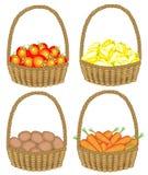 E Собрал богатый сбор корзина полна зрелых сочных овощей Свежие картошки, моркови, перцы, томаты, a иллюстрация вектора