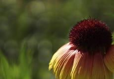 E Цветения на запачканном зеленым цветом bokeh предпосылки Конец-вверх вектор детального чертежа предпосылки флористический сфоку Стоковые Изображения