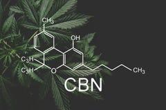 E 医疗大麻,增长的大麻,despancery事务 r 向量例证