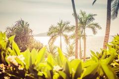 E 树和灌木美丽的丛林在海滩在日落期间 库存图片