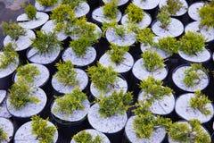 E 植物托儿所 库存图片