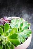 E 现代书桌的时髦和简单的植物 免版税图库摄影