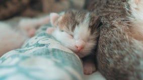 E 睡觉在a的逗人喜爱的宠物小猫 股票视频