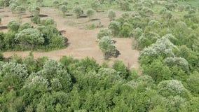 E 绿色领域和树 陡峭的含沙路 E 股票视频