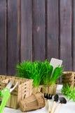 E 绿草,有机罐,工具,在木背景的pruner与拷贝空间,减速火箭的样式 库存图片