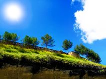 在背景高山的美丽的松树 喀尔巴阡山脉夏天风景 图库摄影
