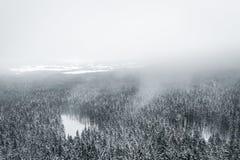 冬天来临 库存照片