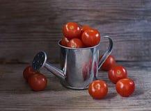 在木背景的西红柿 免版税库存照片
