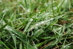 在草的露滴在清早 免版税库存图片