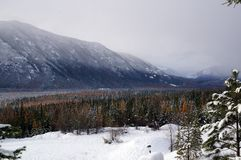 Cena da floresta da montanha do inverno Imagens de Stock Royalty Free