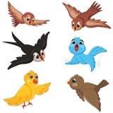 Insieme dell'illustrazione di vettore degli uccelli immagini stock libere da diritti