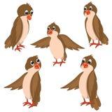 Illustrazioni di vettore degli uccelli di Brown messe Fotografia Stock