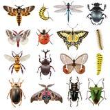 έντομα εικονιδίων που τίθ&e Στοκ Φωτογραφίες