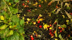 E Autumn Landscape stock video footage
