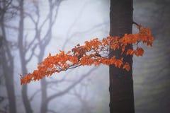 E Autumn Stream r fotografia de stock