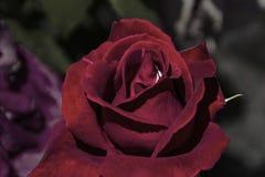 E Blommor fr?n min tr?dg?rd royaltyfria bilder