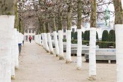 E 02 19: Bomen op onderstel van kunsten Brussel stock fotografie