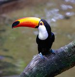 E brasil Iguazu fotografia de stock