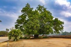E cambodia fotografie stock