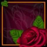 E-card: Red rose Royalty Free Stock Photography