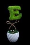 E charakter Kształtująca roślina na Czarnym tle fotografia stock