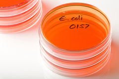 E coli Stock Photos