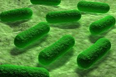 E coli Bacteria Stock Photography