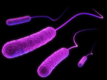 E-coli bacteria. 3d rendered close up of some e-coli bacteria Royalty Free Stock Images
