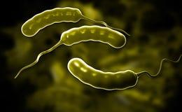 E coli Bacteria Stock Photos